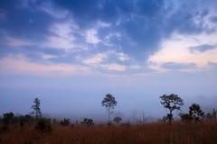 Mglisty ranku wschód słońca w górze z chmurą przy Thung Salang Lua zdjęcie royalty free