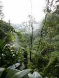 mglisty tropikalny las deszczowy Zdjęcia Stock