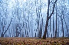 Mglisty w lesie Fotografia Royalty Free