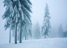 Mglisty widmowy sosnowy las w zimy górze obraz royalty free
