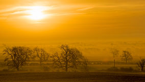 Mglisty świt przez drzewa i pola Fotografia Royalty Free