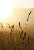 mglisty wschód słońca Fotografia Stock