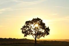 mglisty wschód słońca Zdjęcia Royalty Free