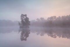Mglisty wschód słońca na dzikim jeziorze Zdjęcie Royalty Free