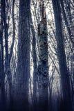 Mglisty, wspaniały las, wiele drzewa Obrazy Stock