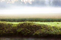 Mglisty zboża pole przy świtem Fotografia Stock