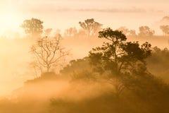 Mglistych chmur piękny Mgłowy las podczas wschód słońca gór Zdjęcie Stock