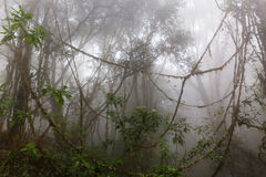 Mgłowa dżungla Zdjęcia Stock