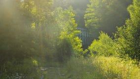 Mgłowy lato ranek Fotografia Stock