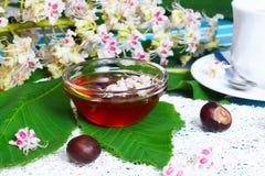 Miód, filiżanka herbata i owoc kasztan, Zdjęcia Royalty Free