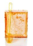 Miód grępla i łyżka na białym tle Obraz Stock