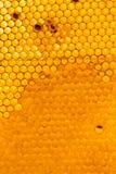 Miód grępla z miodem jako tło fotografia stock