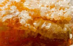 Miód grępla Zdjęcie Royalty Free