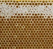 Miód, słodki miód, wyśmienicie, beekeeping, honeycomb, naturalni produkty Obraz Royalty Free