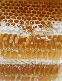 Miód, słodki miód, wyśmienicie, beekeeping, honeycomb, naturalni produkty Fotografia Royalty Free
