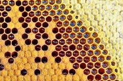 Miód w honeycomb zbliżeniu Obrazy Royalty Free