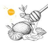 Miód z cytryny i mennicy wektoru rysunkiem Drewniana łyżka, miodowy dr royalty ilustracja