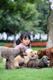Miúdo asiático que joga com cães Fotografia de Stock Royalty Free