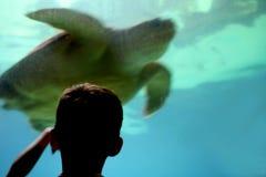Miúdo no aquário Fotos de Stock