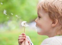Miúdo nos desejos de sopro do prado na semente do dente-de-leão Fotografia de Stock Royalty Free