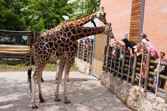 Miúdos no jardim zoológico Foto de Stock Royalty Free