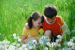Miúdos no prado Imagem de Stock Royalty Free