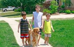 Miúdos que andam o cão Foto de Stock