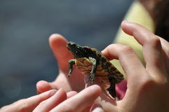 Miúdos que prendem uma tartaruga Imagens de Stock