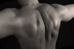 mięśnie Zdjęcie Royalty Free