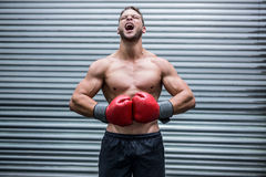 Mięśniowy boksera krzyczeć Fotografia Stock