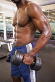 Mięśniowy mężczyzna ćwiczy z dumbbells w gym Zdjęcie Royalty Free