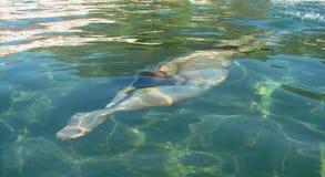 Mięśniowy młodego człowieka dopłynięcie pod wodnymi backstroke przełazami obrazy royalty free