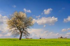 Między Apulia i Basilicata: wiosna krajobraz z pszenicznym polem Włochy fotografia royalty free
