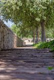 Między cieniami drzewa obraz stock