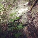 Między pęknięciami góry Zdjęcie Stock