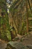 Między skałami znalezienia drzewny światło Zdjęcia Stock
