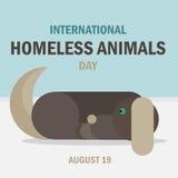Międzynarodowy bezdomny zwierzę dzień Fotografia Royalty Free