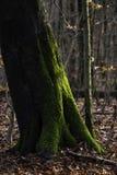 Miękcy światła w Grudniu w lesie obrazy royalty free