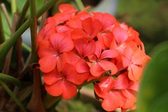 Miękcy i delikatni kwiaty obrazy stock