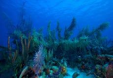 Miękcy Korale zbliżać Cayo Largo, Kuba Obraz Royalty Free