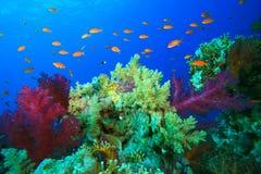 miękcy piękni korale fotografia stock