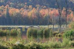 Miękka część krajobraz w jesieni zdjęcie royalty free