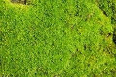 Miękka część mech zakończenia natury abstrakta Zielony tło Zdjęcie Royalty Free
