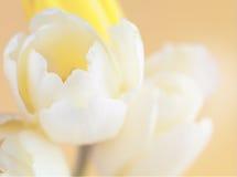 Miękka część skupiający się kwiat Zdjęcie Stock