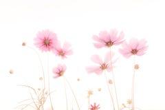 Miękka ostrość i zamazany kosmosu kwiat Fotografia Stock