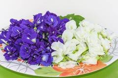 Miękka ostrość kolorowa Błękitny groch, Motyli groch, Clitoria ternatea, Leguminosae, Papilionoideae, Fabaceae, kwiat na talerzu  Obraz Stock