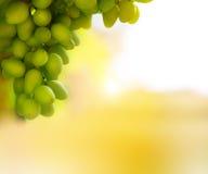 Miękki światło na wiązce winogrona zdjęcia royalty free