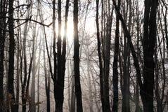 Miękki światło słoneczne w lasowej zimy naturalnym tle Zdjęcia Royalty Free