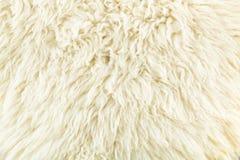 Miękki kolor śmietankowy wełny tekstura Fotografia Royalty Free