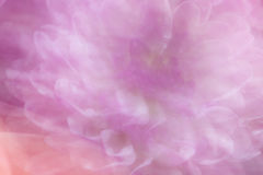 Miękki ostrości stokrotki tło Fotografia Stock